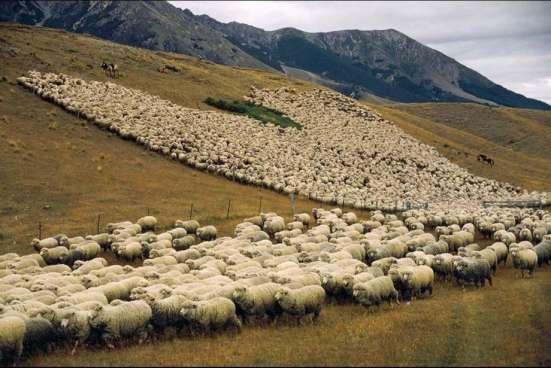 валяем валенки из шерсти овечки меринос. мягкие, не колючие в Екатеринбурге Фото 3