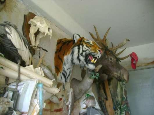 Амурский тигр в Москве Фото 1
