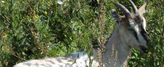 Продам или сдам в аренду земельный участок 2,45 га в Чувашии в Чебоксарах Фото 3