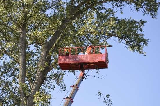 Спил, валка деревьев любой сложности в Белгороде Фото 1