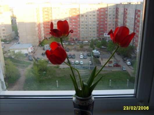 Тюльпаны, луковицы