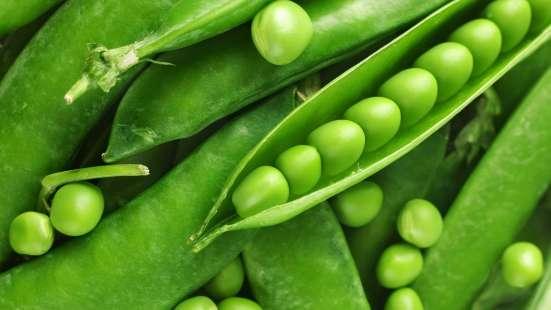 Семена овощей весовые, пакетированные оптом в г. Полоцк Фото 2