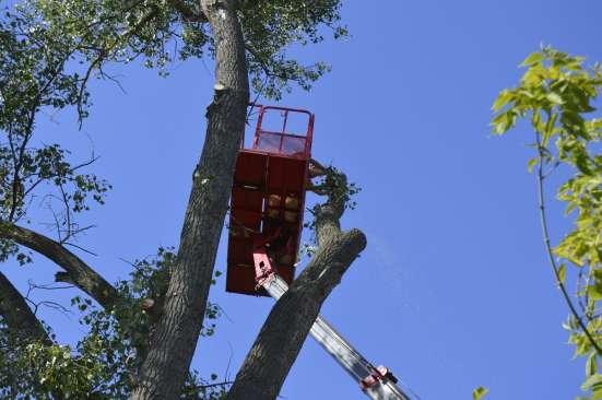 Спил вырубка деревьев