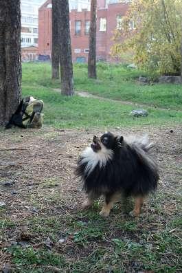 Дрессировка собак в Екатеринбурге Фото 1