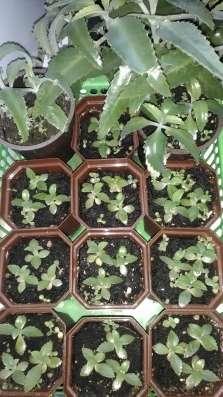 Домашние лекарственные растения.