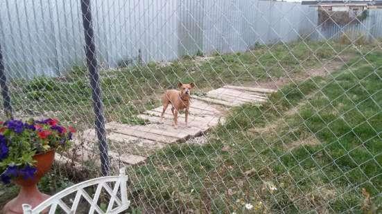 Зоогостиница для собак.Передержка