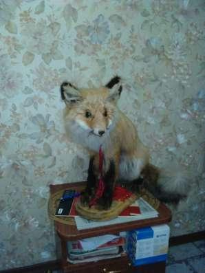 Чучело лисы в Екатеринбурге Фото 1