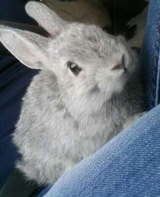 Кролик (2мес) + клетка