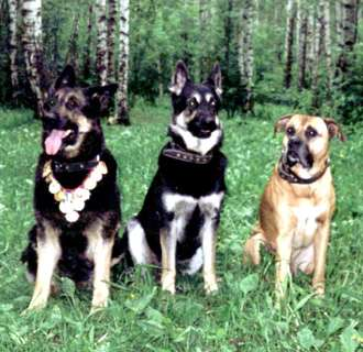 Дрессировка собак, коррекция поведения