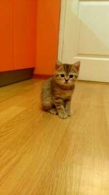 Котятки тигрятки