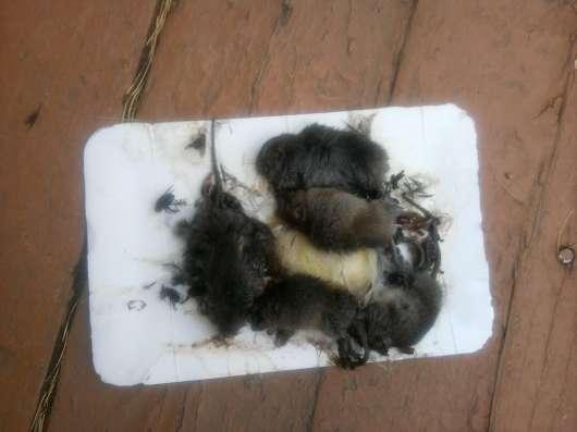 Уничтожение всех видов грызунов