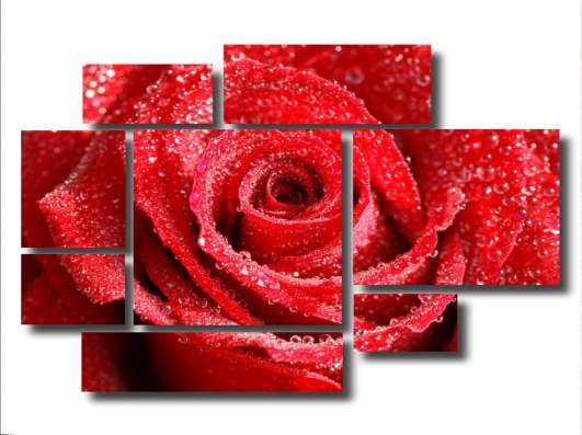 Модульная картина: Роза под дождем