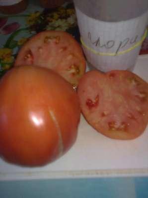 Продаю семена томатов для ОГ и теплиц, более 100 сортов! в Коломне Фото 2