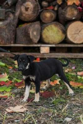 Достойная собака для достойного человека в Сергиевом Посаде Фото 2