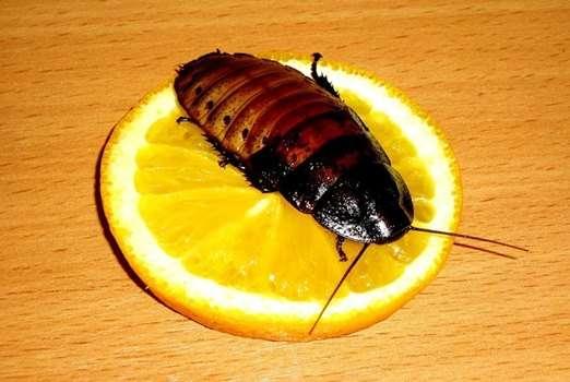 Уничтожение тараканов и муравьев
