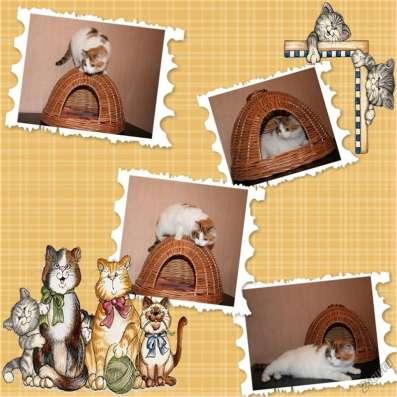 Домик плетённый для кошки
