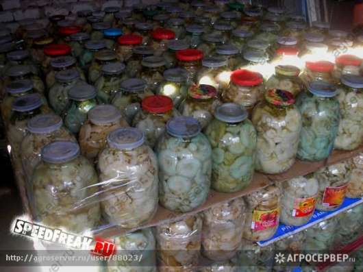 продам грибы грузди оптом