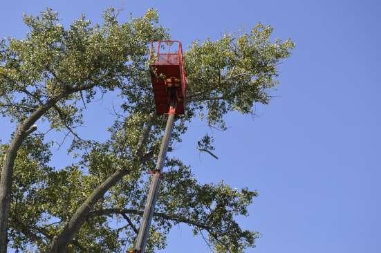 Удаление опасно стоящих деревьев в Белгороде Фото 3