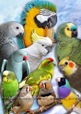 Приют для попугаев- в семье