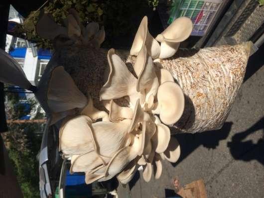 Грибные блоки для выращивания грибов вёшенки