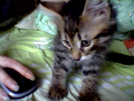 котята домашние в добрые руки в Москве Фото 3