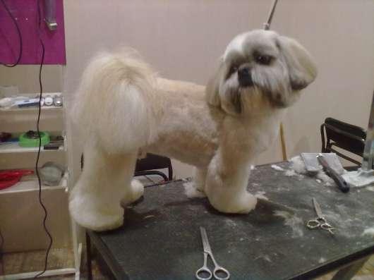 Профессиональная стрижка собак любых пород в Екатеринбурге Фото 3