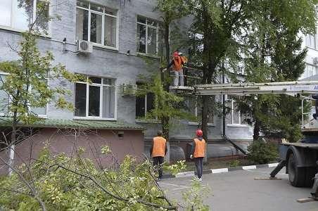 Спилить дерево любой сложности в Белгороде