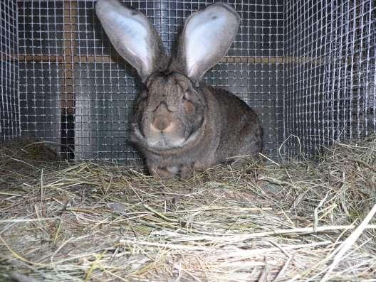 Клетки для кроликов в Екатеринбурге Фото 1