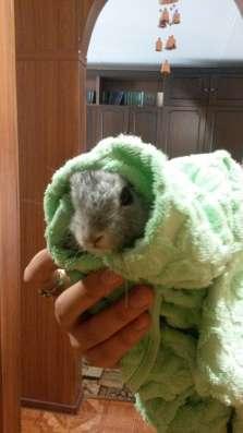 Кролик (2мес) + клетка в Новосибирске Фото 4