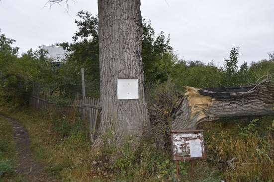 Спил, валка деревьев любой сложности в Белгороде Фото 4