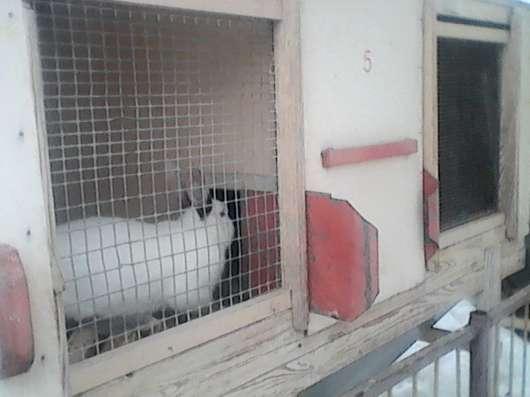 Комбикорма для кур и кроликов в Ульяновске Фото 1