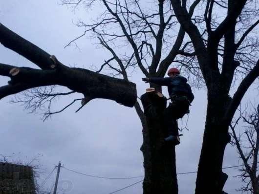 удаление аварийных деревьев в домодедово