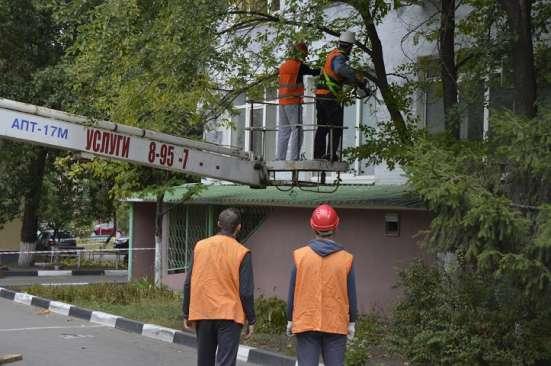 Кронирование и спил аварийных деревьев