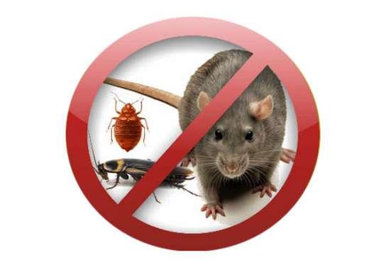 уничтожение вредных насекомых и грызунов.