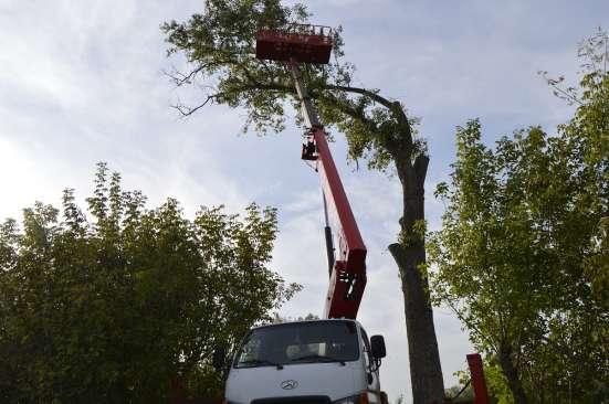 Снос спил сложных аварийных деревьев