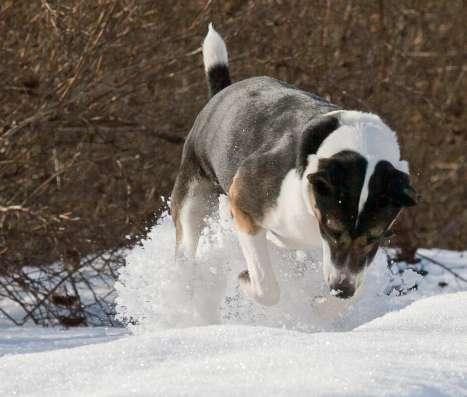 Обаятельный пес Рей -для активных людей