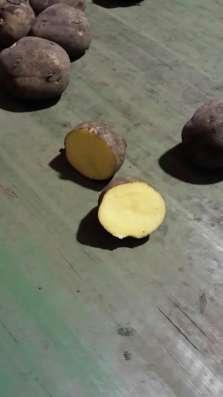 картофель без посредников в Москве Фото 1