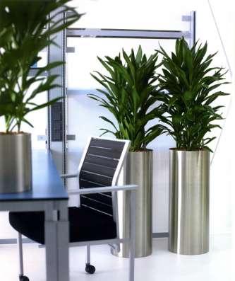 фитодекор для Вашего офиса