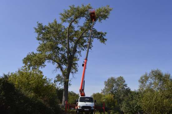 Спил деревьев, удаление деревьев