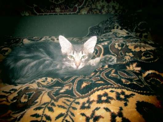 Котёнок серый в добрые руки