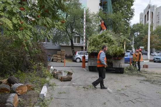 Спил, кронирование, валка деревьев в Белгороде Фото 2