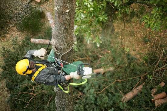удаление аварийных деревьев в домодедово Фото 1
