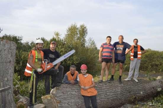 Вырубим проблемные деревья в Белгороде Фото 3