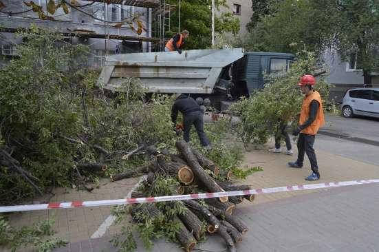 Спил, кронирование, валка деревьев в Белгороде Фото 1