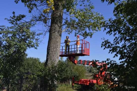 Спил деревьев любой сложности в Белгороде Фото 2