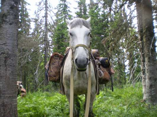 конные походы