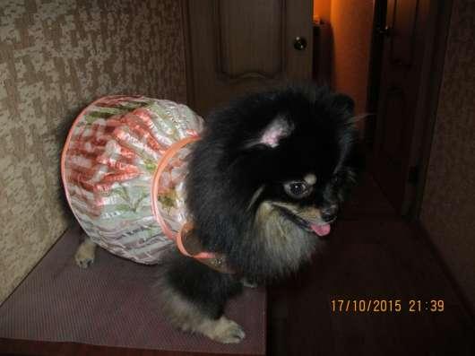 одежда для собак в Александрове Фото 2