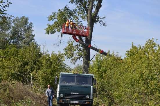 Удаление опасно стоящих деревьев в Белгороде Фото 1