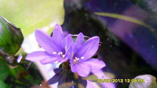 Аквариумные растения. в Челябинске Фото 2