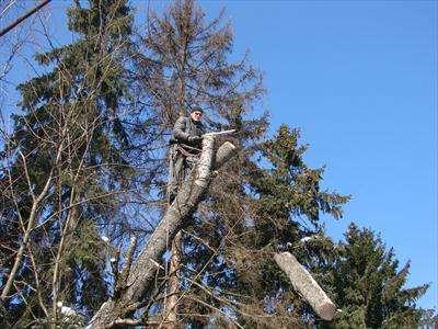 удаление аварийных деревьев в домодедово Фото 3